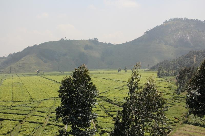 RuandaIMG_7085
