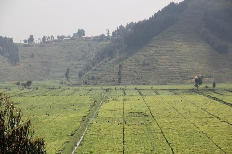 RuandaIMG_7086