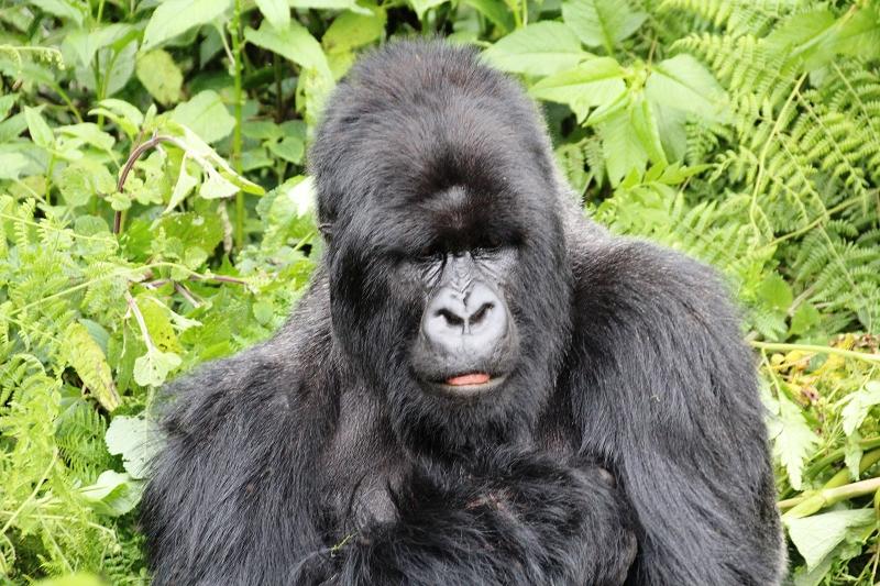 RuandaIMG_7184