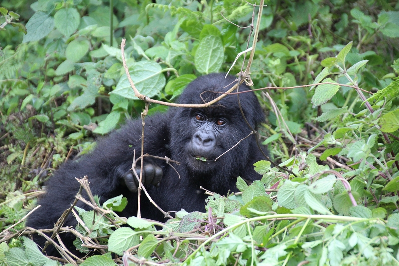 RuandaIMG_7209