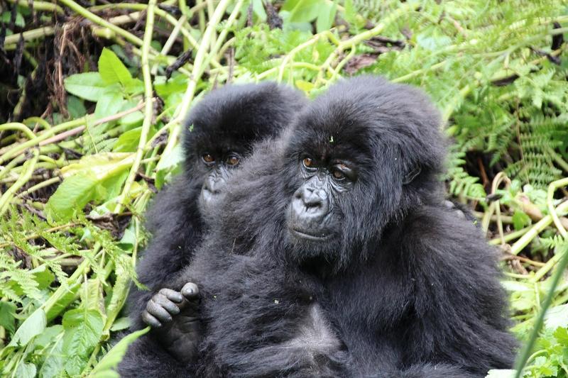 RuandaIMG_7231