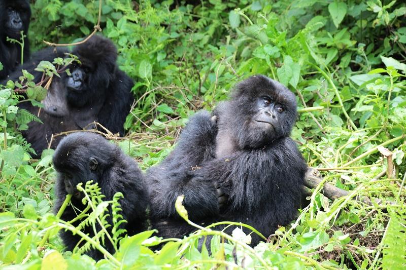 RuandaIMG_7269