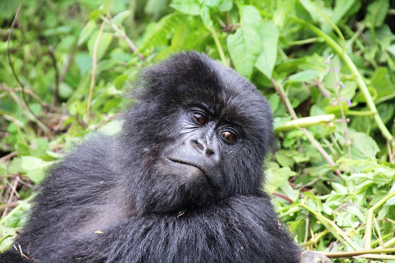 RuandaIMG_7272