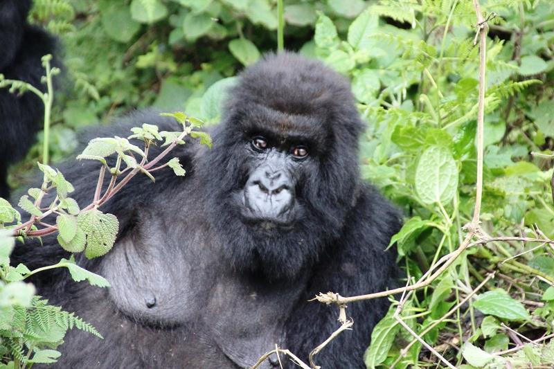 RuandaIMG_7274