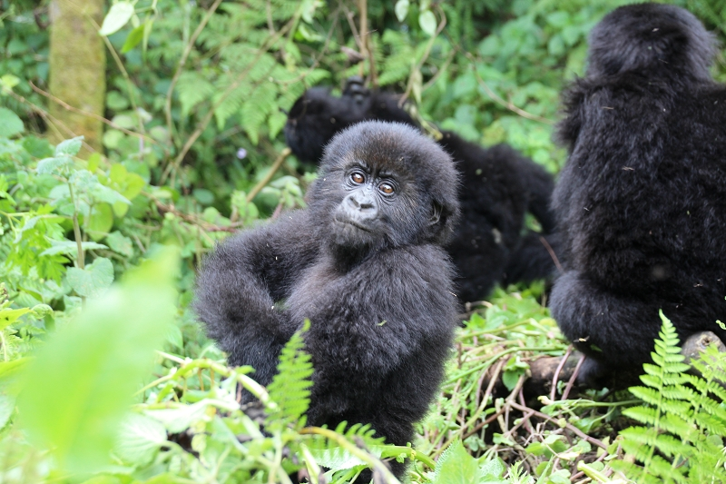 RuandaIMG_7295