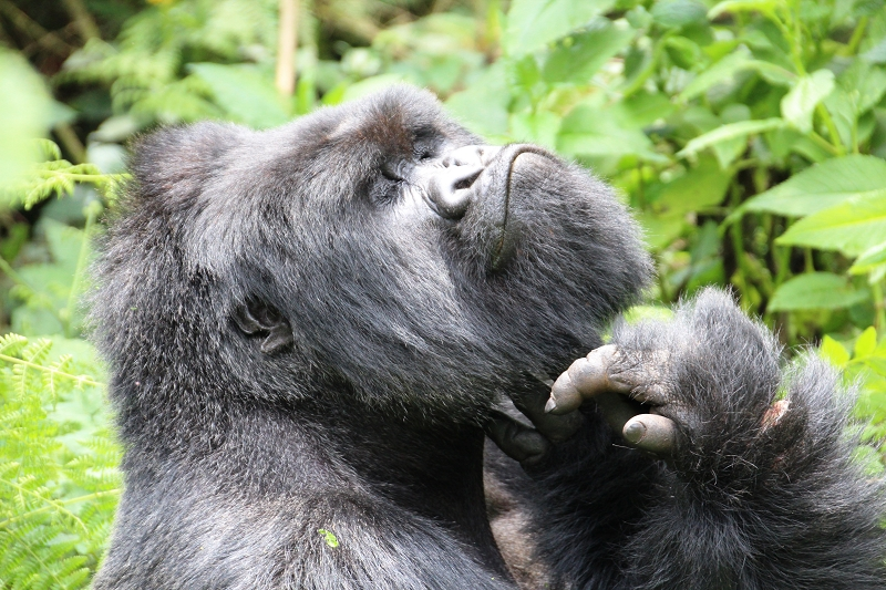 RuandaIMG_7305