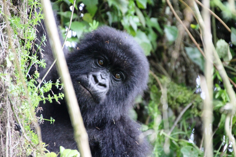RuandaIMG_7335