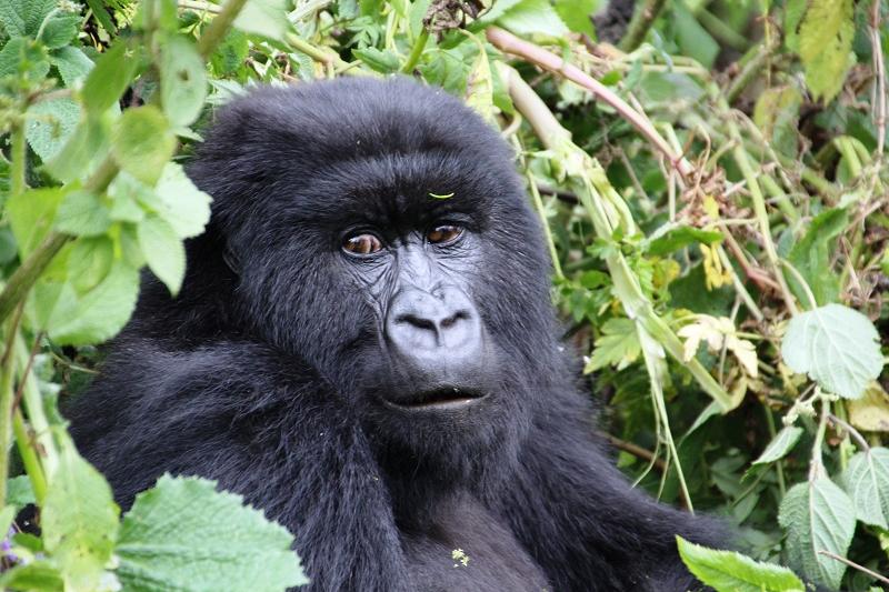 RuandaIMG_7370