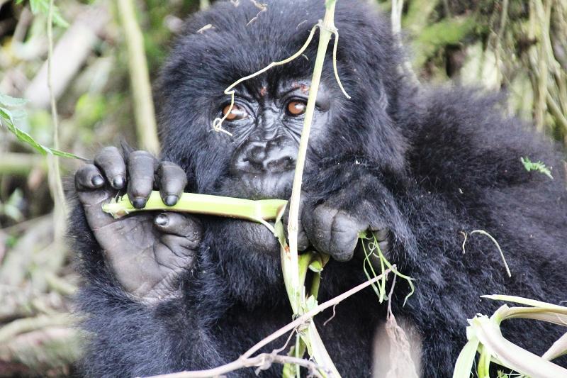 RuandaIMG_7396