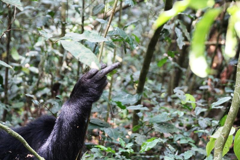 UgandaIMG_8259