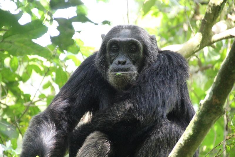 UgandaIMG_8291