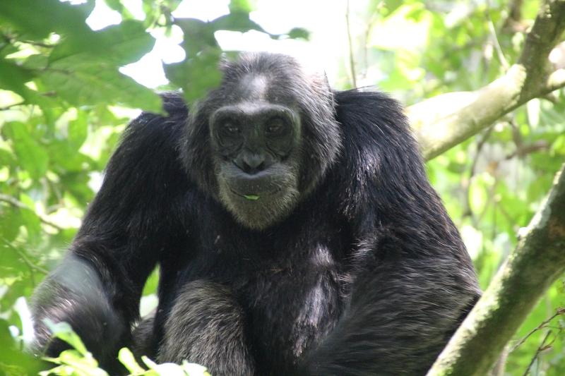 UgandaIMG_8293