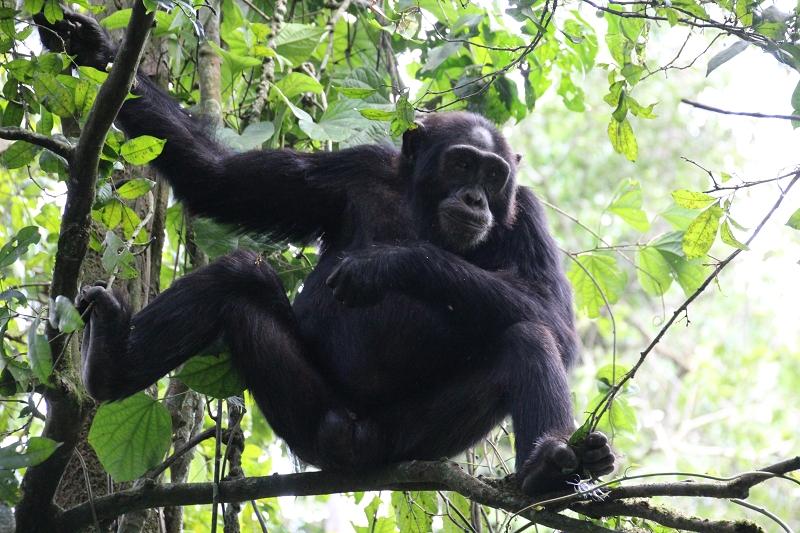 UgandaIMG_8305