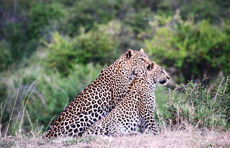 Masai_MaraIMG_0028