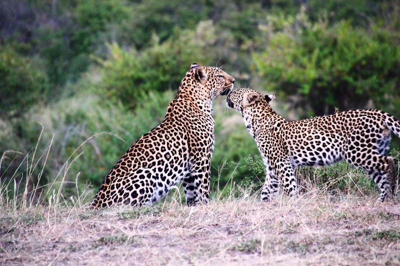 Masai_MaraIMG_0037
