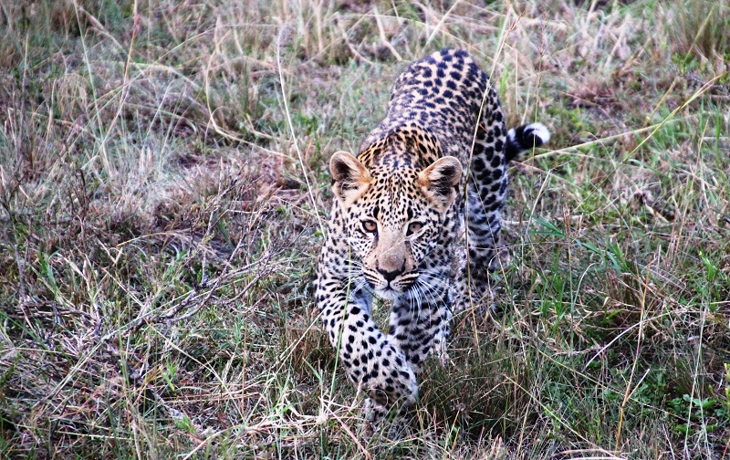 Masai_MaraIMG_0050