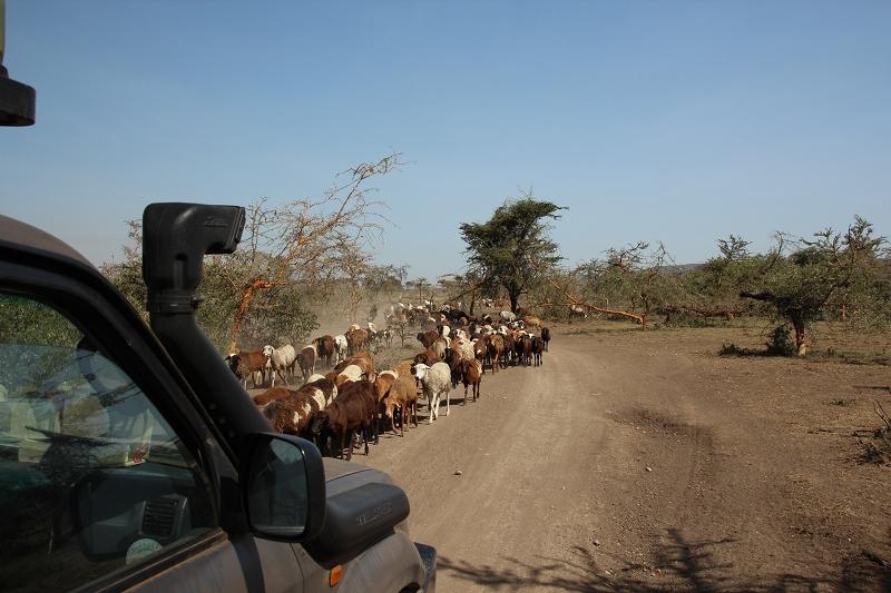 Masai_MaraIMG_0083