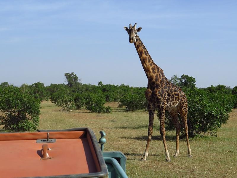 Masai_MaraIMG_0112