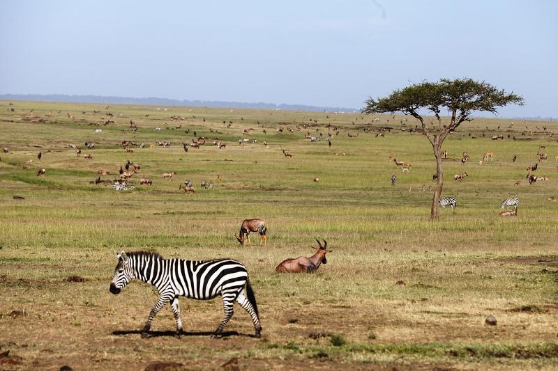 Masai_MaraIMG_1699