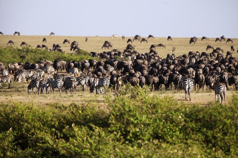 Masai_MaraIMG_1875