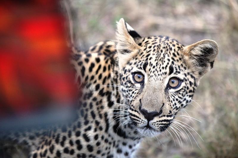 Masai_MaraIMG_2302