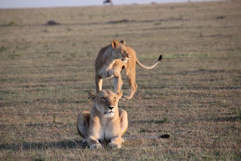 Masai_MaraIMG_9157