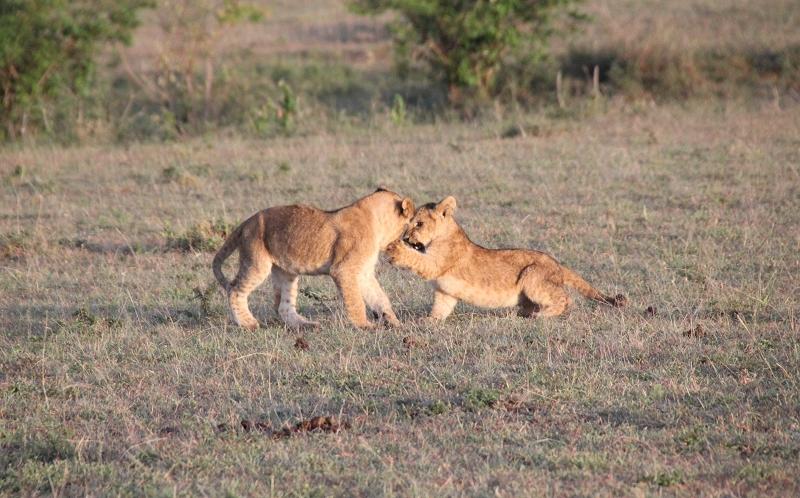 Masai_MaraIMG_9167