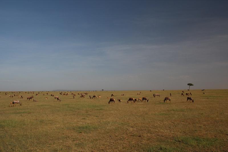 Masai_MaraIMG_9306