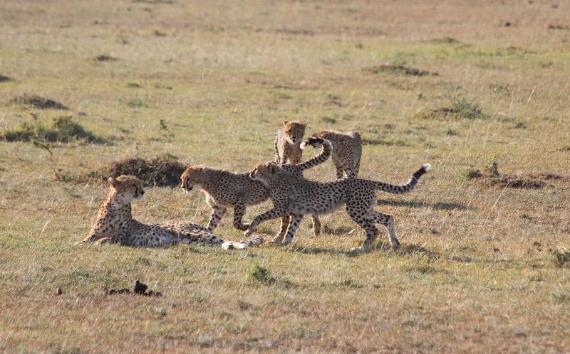 Masai_MaraIMG_9696