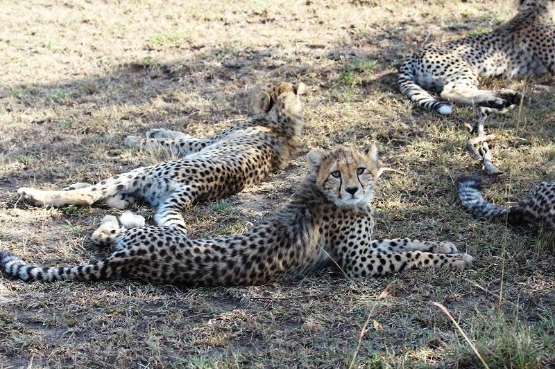 Masai_MaraIMG_9776