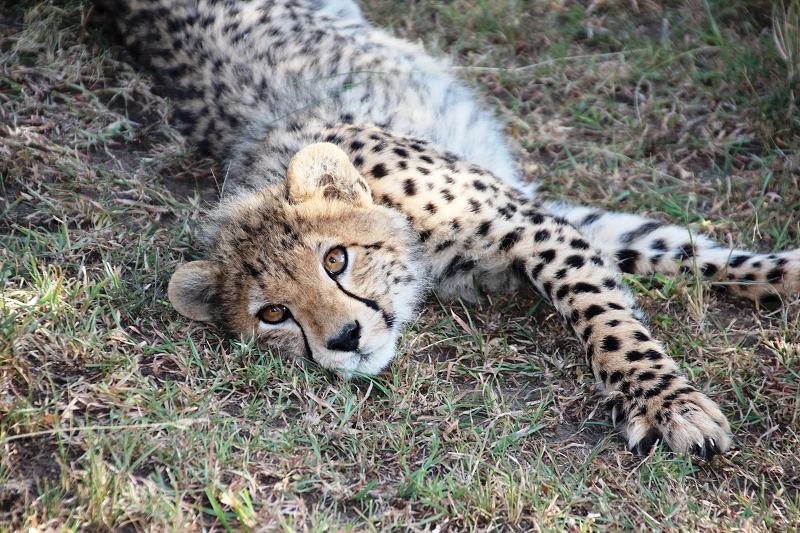 Masai_MaraIMG_9814