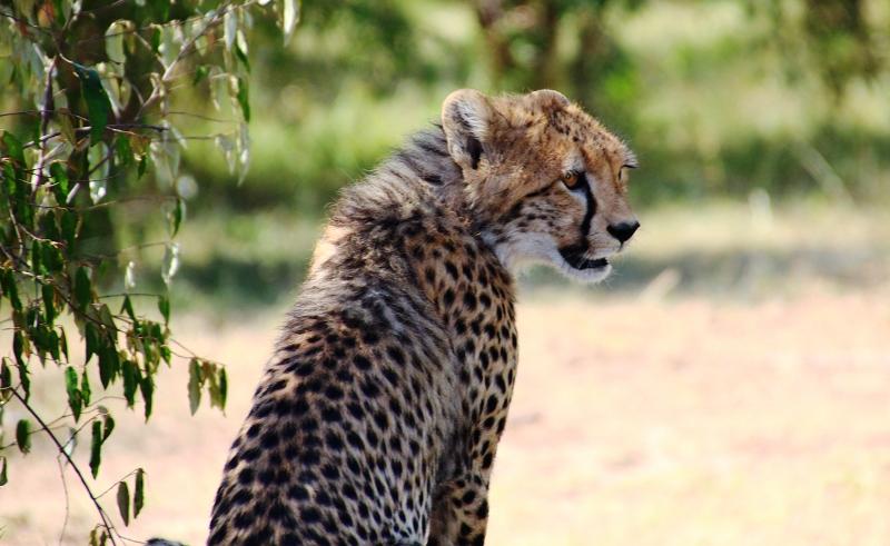 Masai_MaraIMG_9838