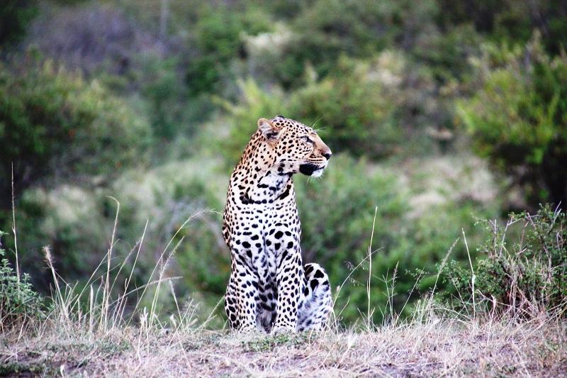 Masai_MaraIMG_9982