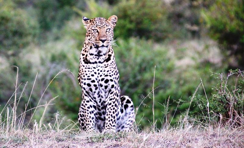 Masai_MaraIMG_9986
