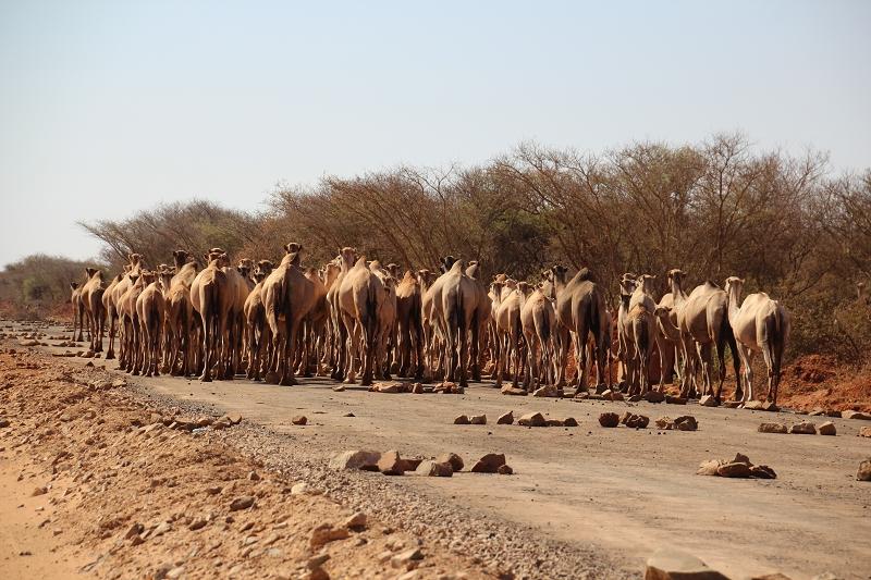 ÄthiopienIMG_0623