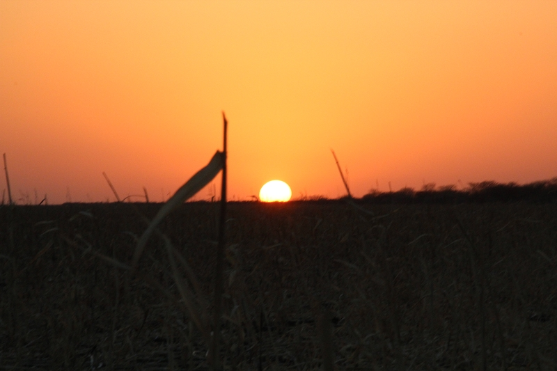 SudanIMG_2176