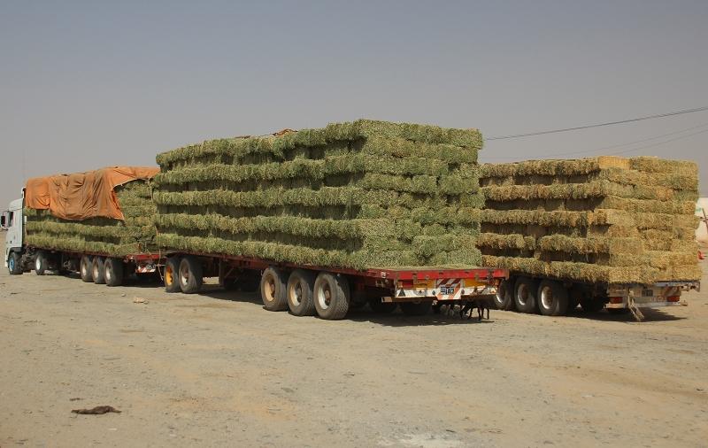 SudanIMG_2631